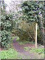 TM3865 : Footpath to Rosemary Lane by Adrian Cable