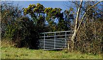 J4681 : Gate, Helen's Bay/Crawfordsburn by Albert Bridge