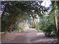 TM3968 : Footpath to Martins Farm by Adrian Cable