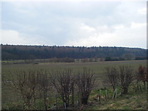 NZ0261 : Shilford West Wood from the A695 by brian clark