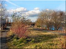 SJ7996 : Trafford Park by David Dixon