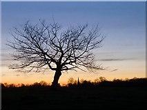 TQ1974 : Richmond Park: trees seen against the evening sky (1) by Stefan Czapski