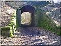 NZ1556 : Old railway  bridge on the Derwent Walk by brian clark