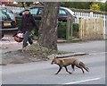 TQ3273 : Fox, Tulse Hill by Derek Harper
