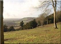 TQ2352 : Buckland Hills by Derek Harper