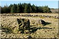 NS4560 : Standing stones at Gleniffer Braes by Lairich Rig
