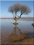 SS7981 : Kenfig Pool by Gareth James
