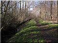 TL8293 : Path through Ash Carr by Hugh Venables