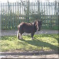SE1931 : Pony grazing - Eversley Drive by Betty Longbottom