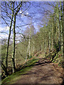 SO7599 : Bridleway near Badger, Shropshire by Roger  Kidd