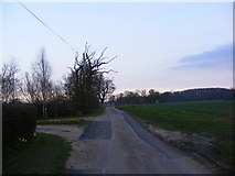 TM3662 : Deadman's Lane, Benhall by Adrian Cable