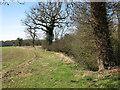 TG1105 : Fields south of Wramplingham by Evelyn Simak