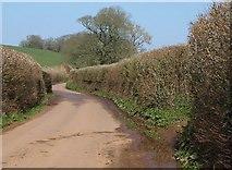 ST0204 : Lane near Bolealler House by Derek Harper