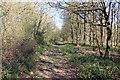 TL1268 : Footpath through Woodland by Simon Judd