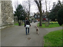 TQ2475 : Walking the dog in All Saints Churchyard by Basher Eyre