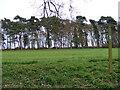 TM3760 : Footpath to the A1094 Farnham Road & Aldecar Lane by Adrian Cable