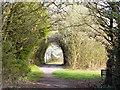 SJ6591 : Birchwood Forest Park by David Dixon