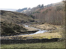 NY8048 : West Allen Dale below Hartley Cleugh by Mike Quinn