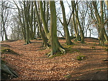 SK2563 : Beech Woodland, Stanton Moor by Mick Garratt