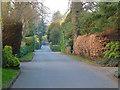 SJ7885 : Bollinway, Hale Barns, Cheshire by Anthony O'Neil