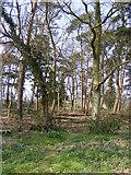 TM3760 : Footpath to Aldecar Lane & A1094 Farnham Road by Adrian Cable
