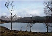 NH0155 : Loch Coulin in March by Alan Reid