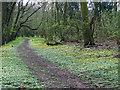 TM2090 : Spring flowers beside path through Crow Green by Evelyn Simak