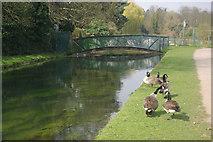 TL3707 : New River, Broxbourne by Stephen McKay
