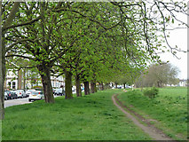 TQ4085 : Horse Chestnut trees, Wanstead Flats by Robin Webster