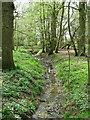 TM1880 : Ditch in woodland, Upper Billingford by Evelyn Simak