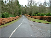 NN9328 : Hedge lined road by Dave Fergusson