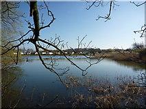 NT6578 : Coastal East Lothian : Seafield Pond, Belhaven by Richard West