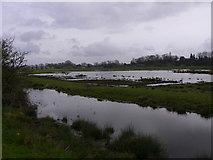 TQ0215 : Waltham Brooks Nature Reserve (2) by Shazz