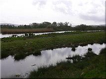 TQ0215 : Waltham Brooks Nature Reserve (3) by Shazz