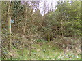 TM3761 : Overgrown footpath to the A12 Benhall Bypass by Adrian Cable