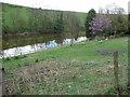 SO5794 : Carp fishing pool near Brockton by Jeremy Bolwell