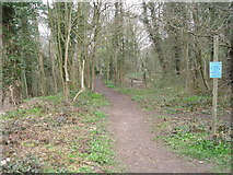 SK3155 : Footpath near the Cromford Canal by JThomas