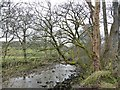SD8491 : The River Ure by Christine Johnstone