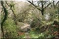SX3957 : Saltash: nearing a creek by Martin Bodman
