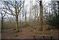 TQ7811 : Bench, Church Wood by N Chadwick
