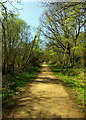 TQ2372 : Path through Putney Heath by Jim Osley