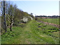 TM3054 : Footpath to the A12 Wickham Market Bypass by Adrian Cable