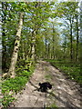 SJ6205 : Farm track in The Longdole by Richard Law