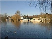 SU7682 : Boats moored on the Thames by Derek Harper