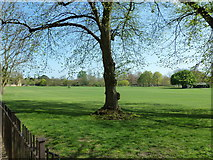 SP5105 : Meadow between Merton College and Christ Church by Basher Eyre