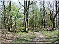SE2104 : Footpath through the woods by Christine Johnstone