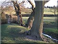 SP1171 : Four old trees on a bank by Robin Stott