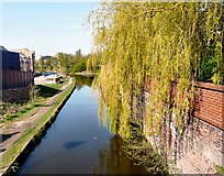 SJ9495 : Weeping over the Peak Forest Canal by Gerald England