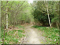 TQ5332 : Footpath through Limekiln Wood by Robin Webster