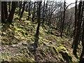 SX6970 : Woodland above the Dart by Derek Harper